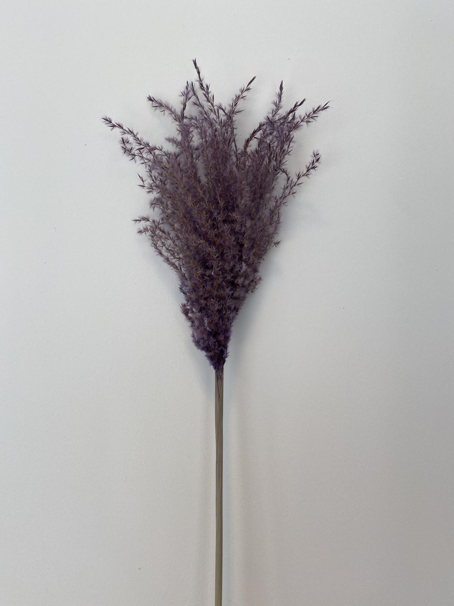 Miscantus Paars-1