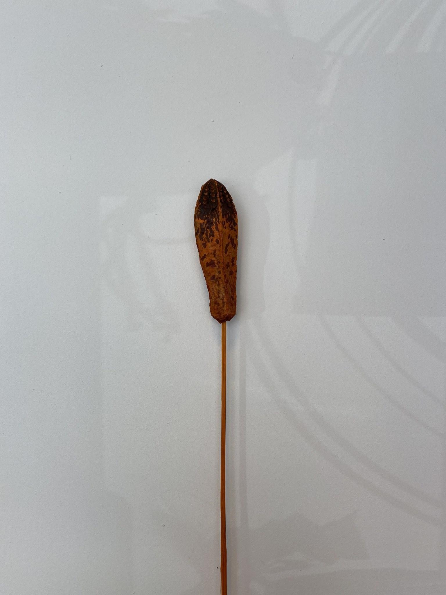 Mehogni Gedroogd Oranje-1