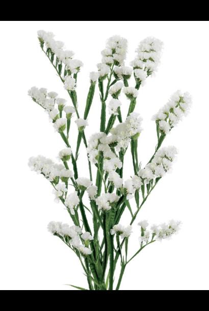 Flowerbar - Limonium Wit
