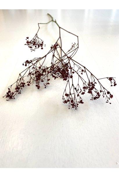 Flowerbar - Gypsophila Burgundy