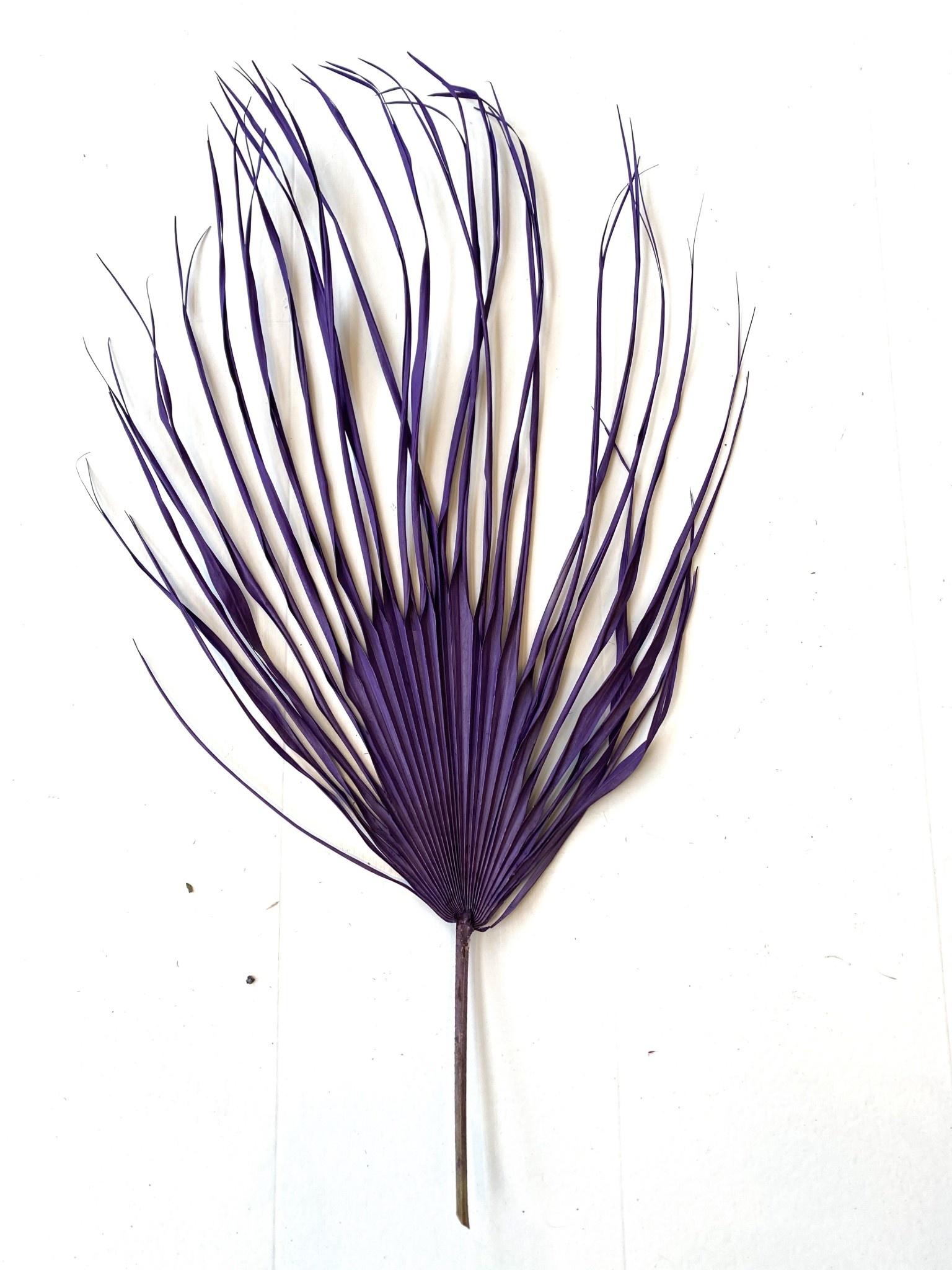 Gedroogd Palmblad Paars-1