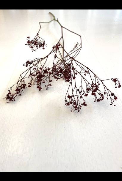 Droogboeket Gipskruid Bordeaux