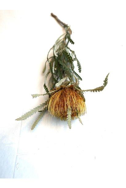 Banksia Dryandra