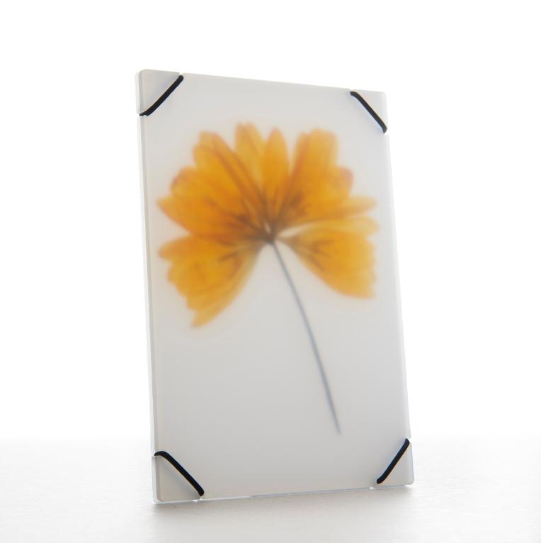 Flower Press - Studio Carmela-2