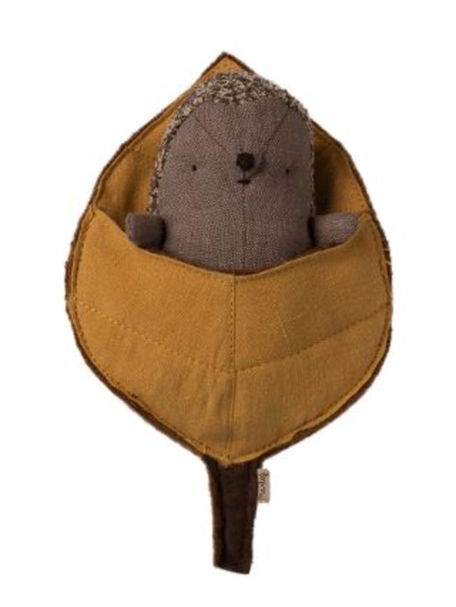 Baby Hedgehog In Leaf-1