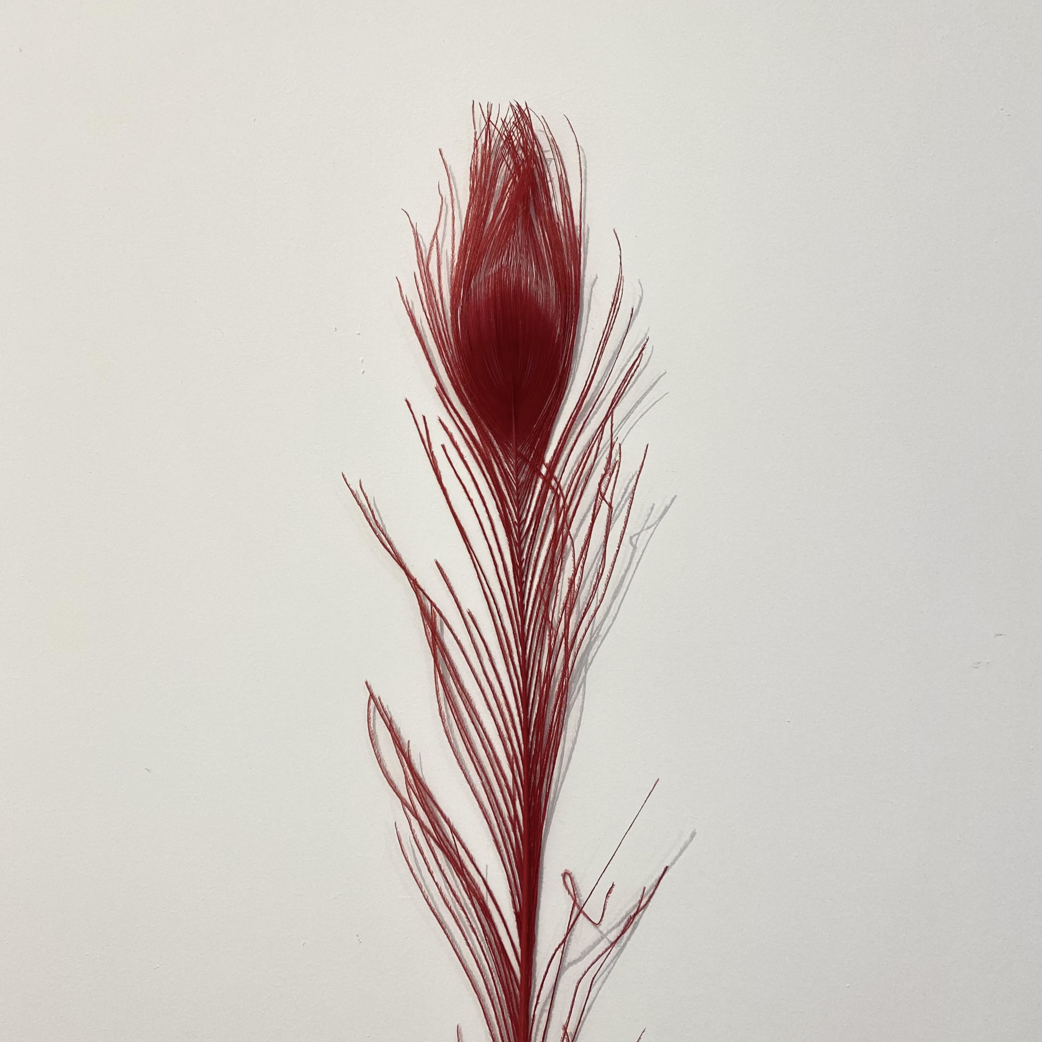 Flowerbar - Pauwenveer Rood XS - Atelier Olala-1