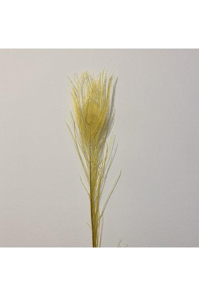 Flowerbar - Pauwenveer Geel XS