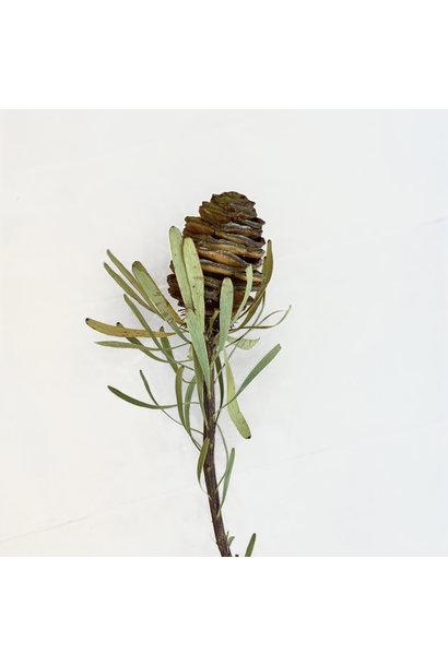 Flowerbar - Kaapsgroen Vrucht