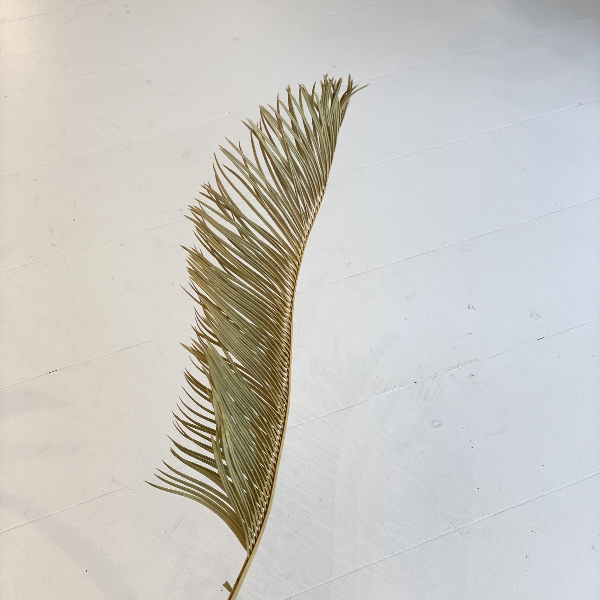 Gedroogd Palmblad Lang-1