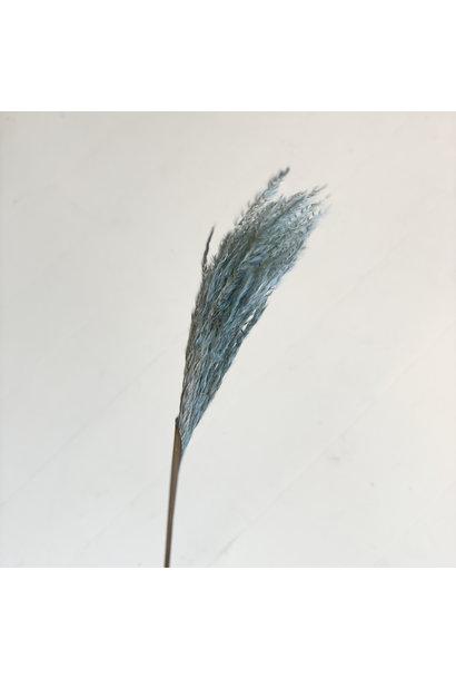 Miscantus Blauw