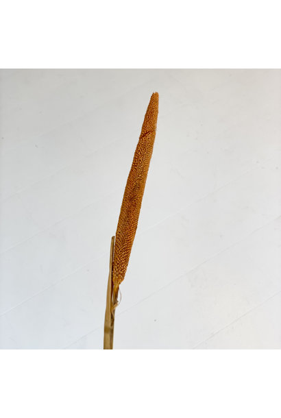 Babalas Oranje