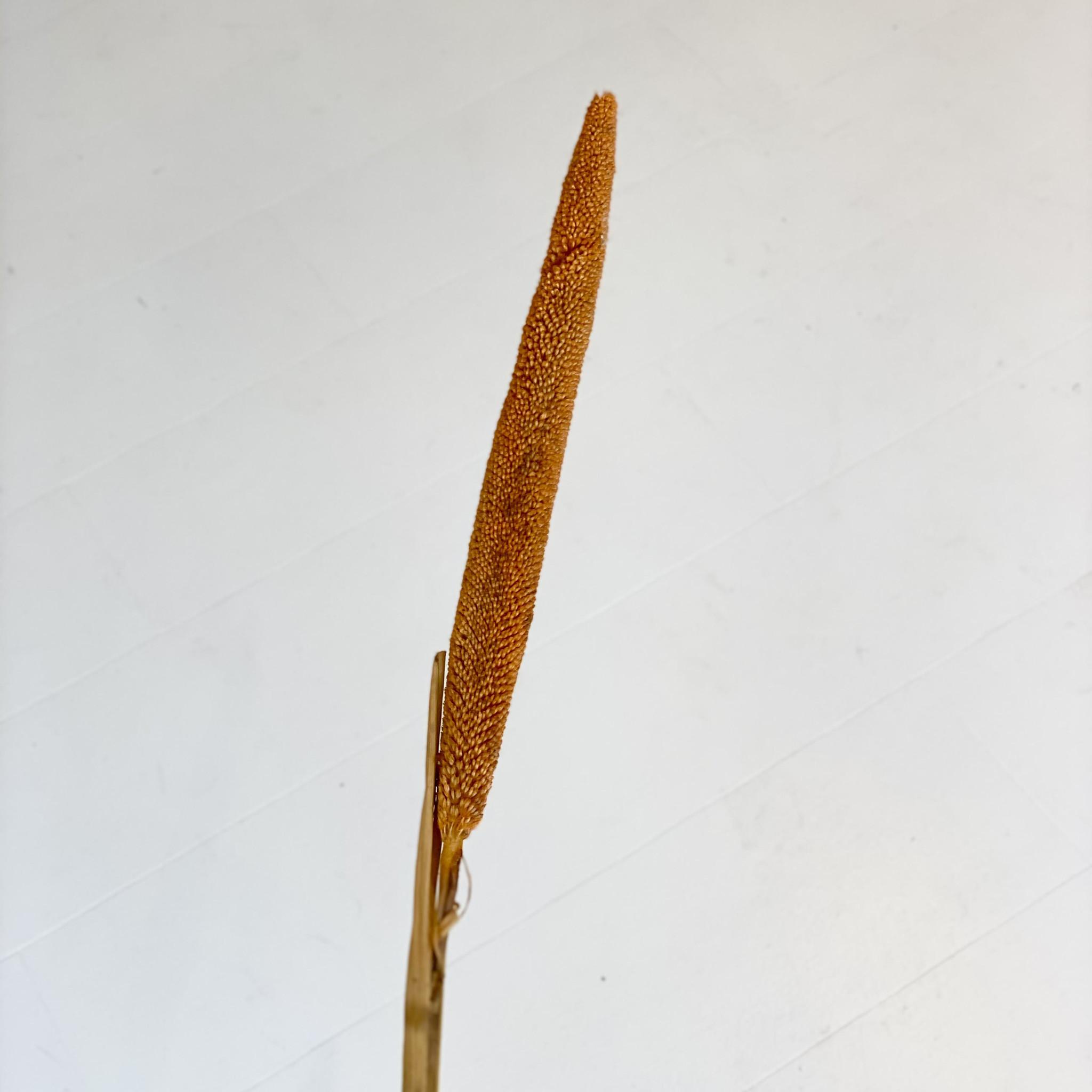 Flowerbar - Babalas Oranje - Atelier Olala-1