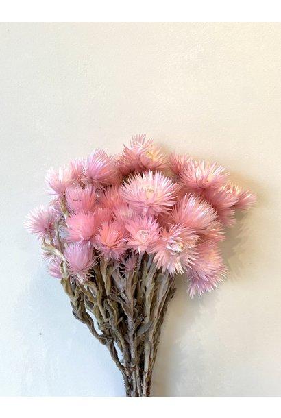 Droogboeket Kaapse Bloemen Lichtroze
