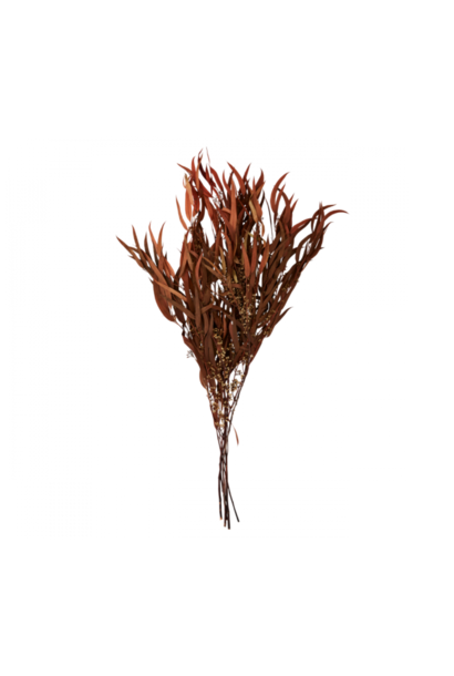 Bussel Eucalyptus Brown