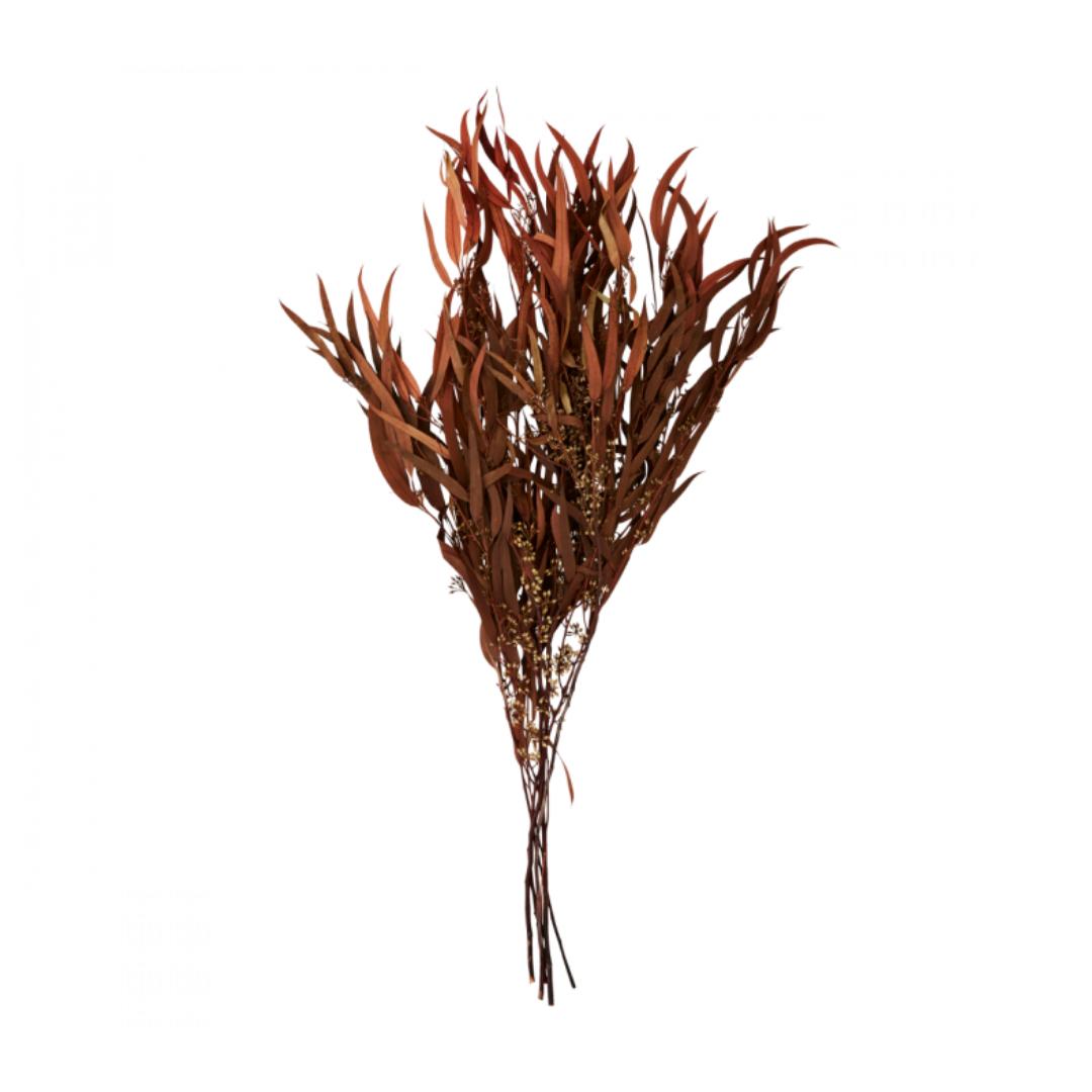 Bussel Eucalyptus Brown - Atelier Olala-1