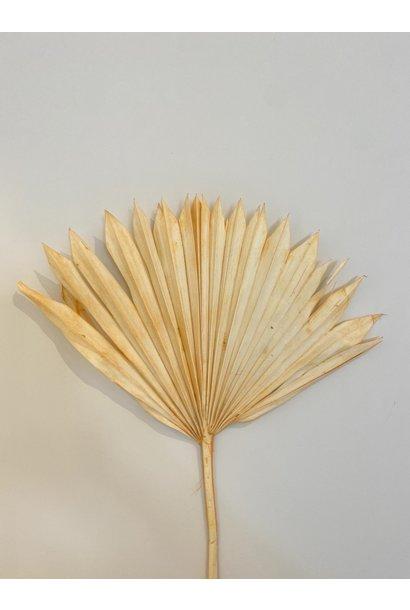 Palmblad Pastel Oranje