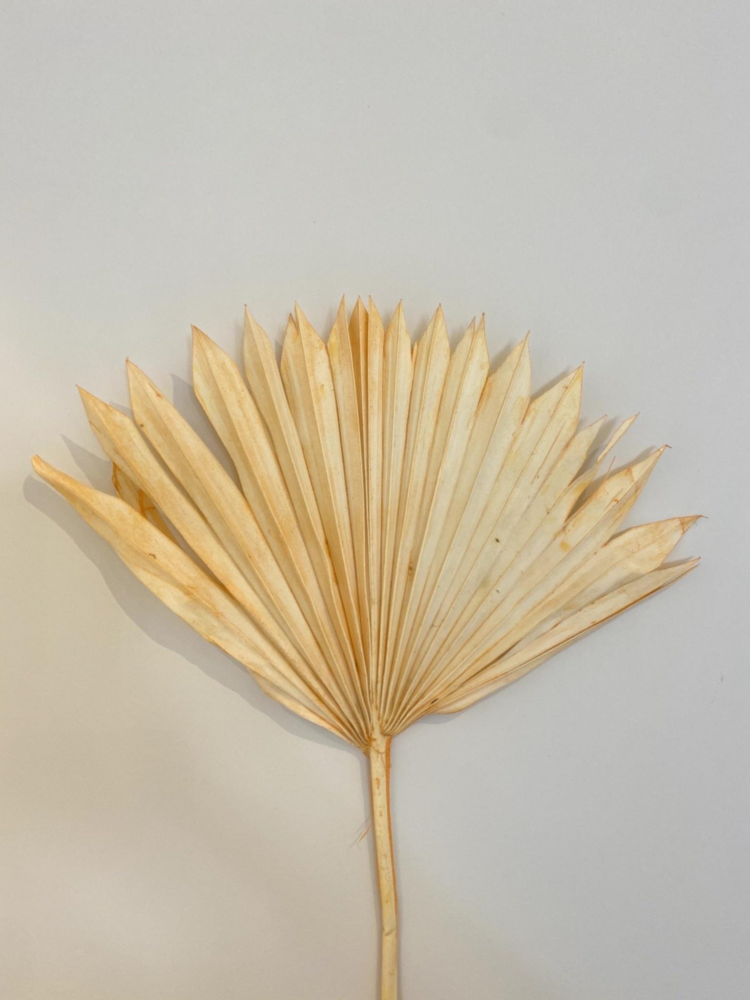 Palmblad Pastel Oranje - Atelier Olala-1