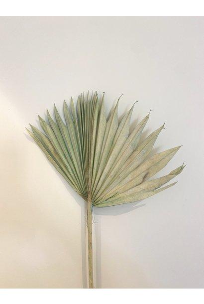 Palmblad Pastel Groen