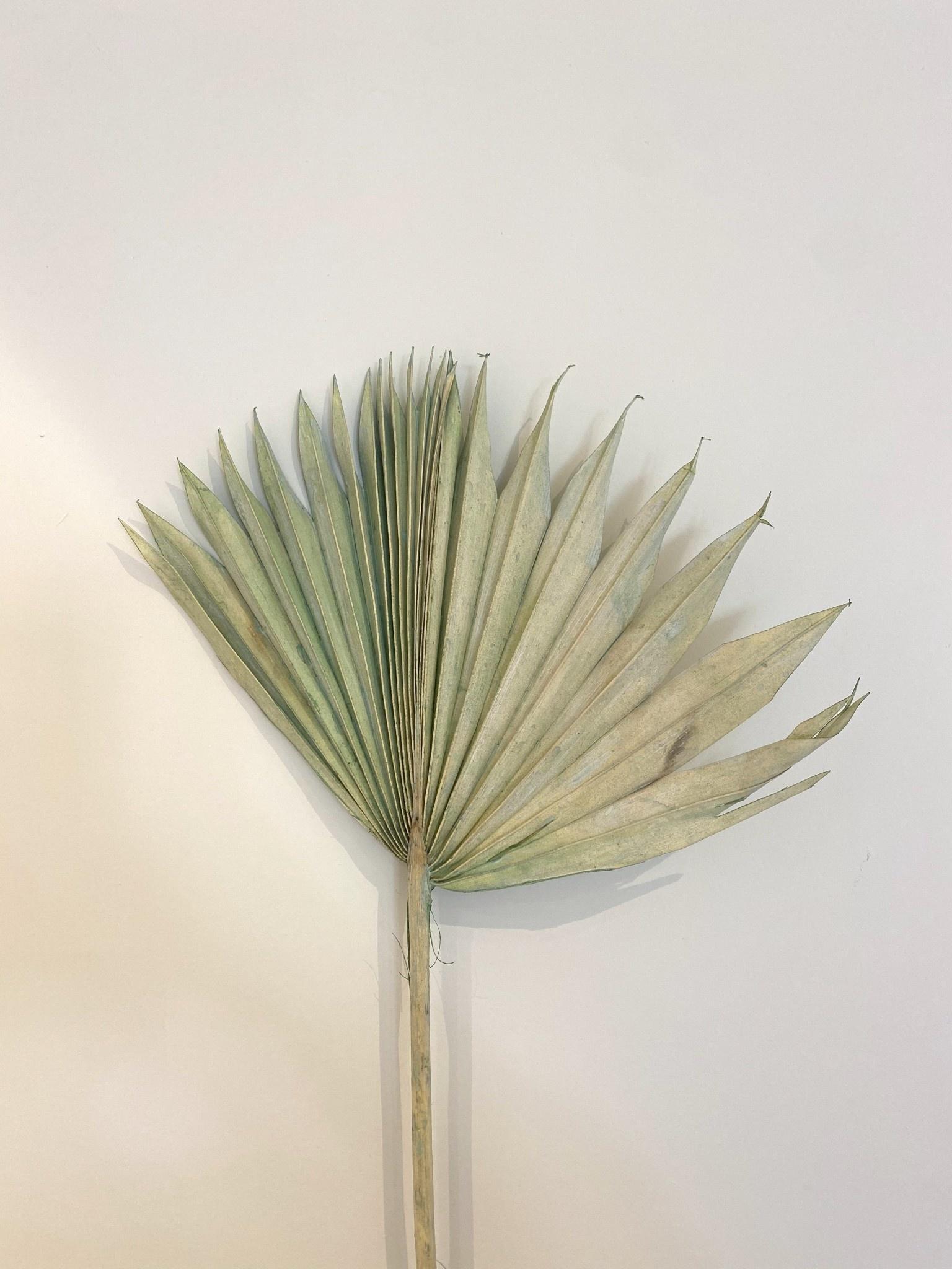 Palmblad Pastel Groen - Atelier Olala-1
