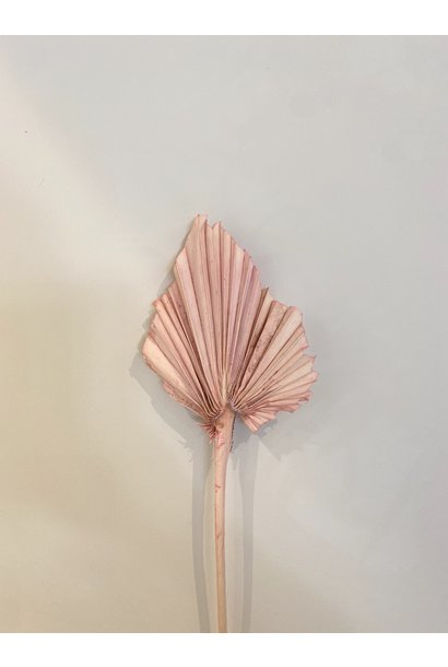 Palmspeer Pastel Roze