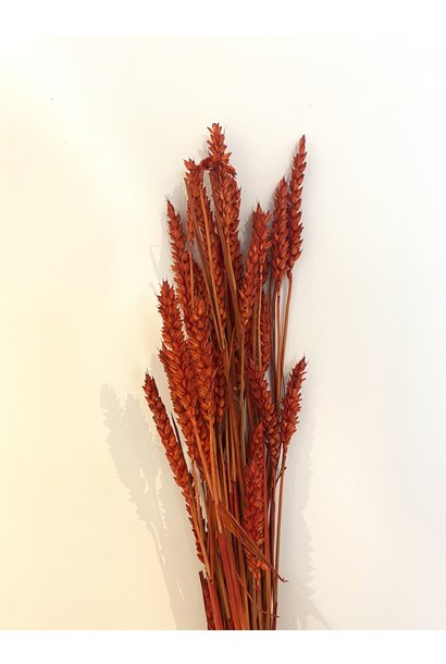 Bussel Wheat Red