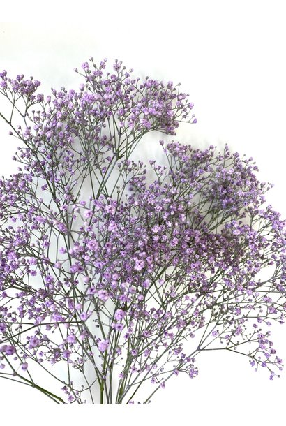 Flowerbar - Gipskruid Lila