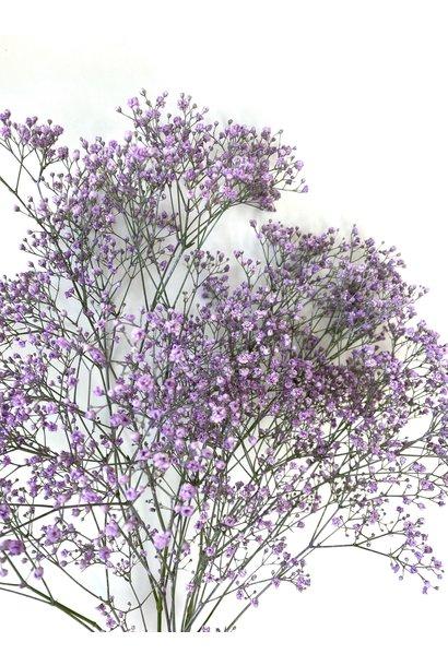 Flowerbar - Gypsophila Lilac