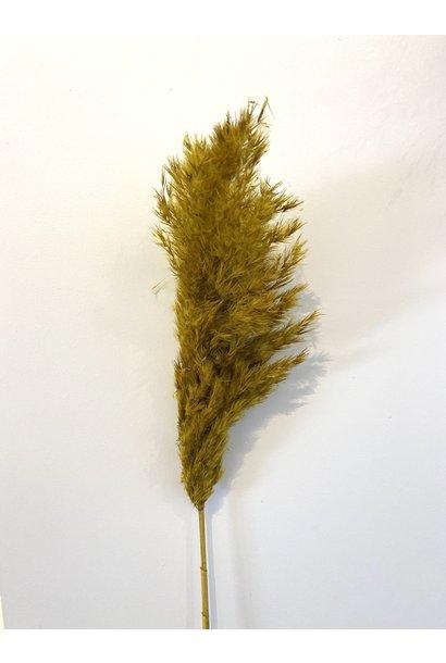 Mini Pampas Feather Mustard Yellow