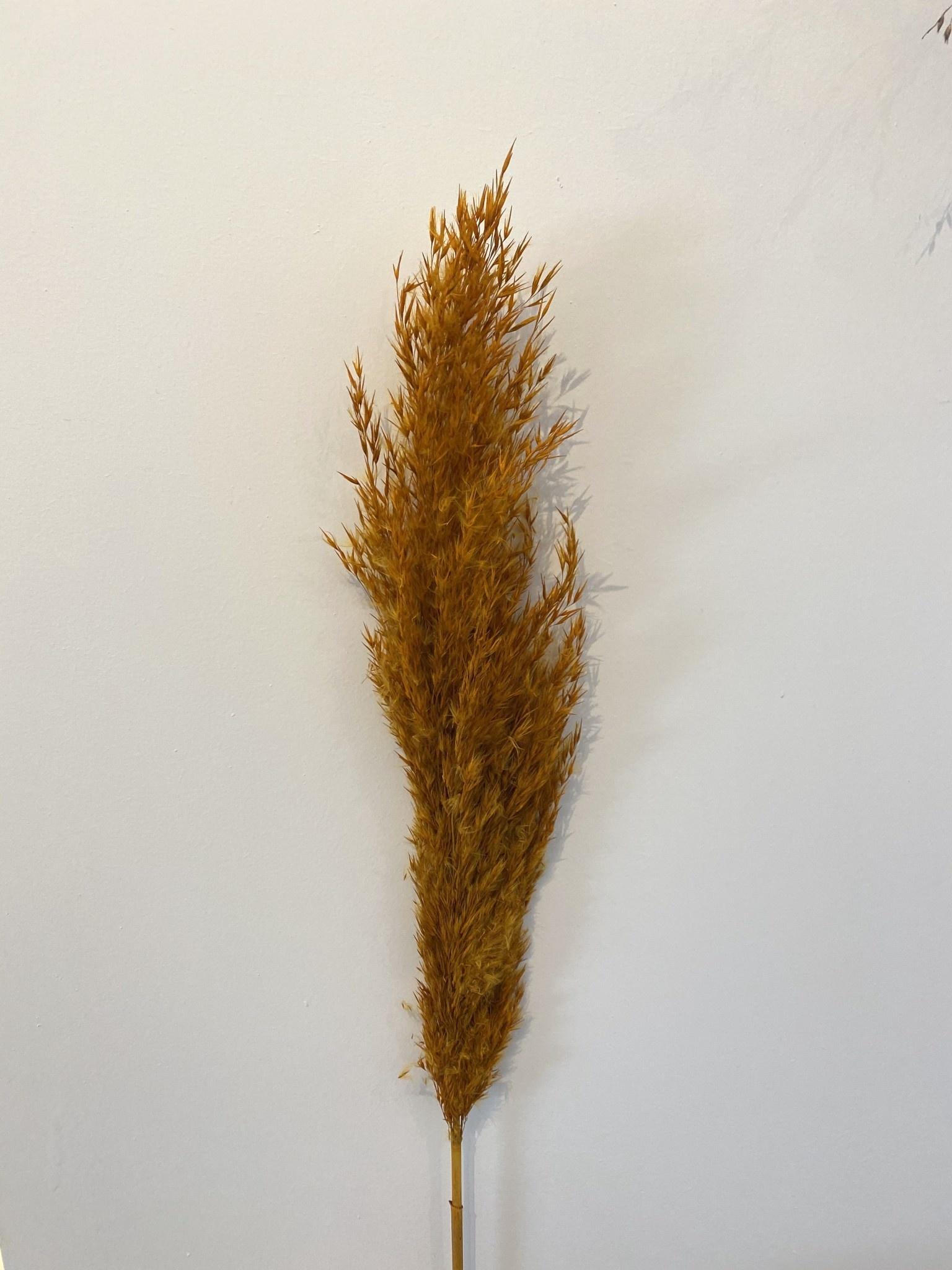 Mini Pampas Plumeau Oranje - Atelier Olala-1