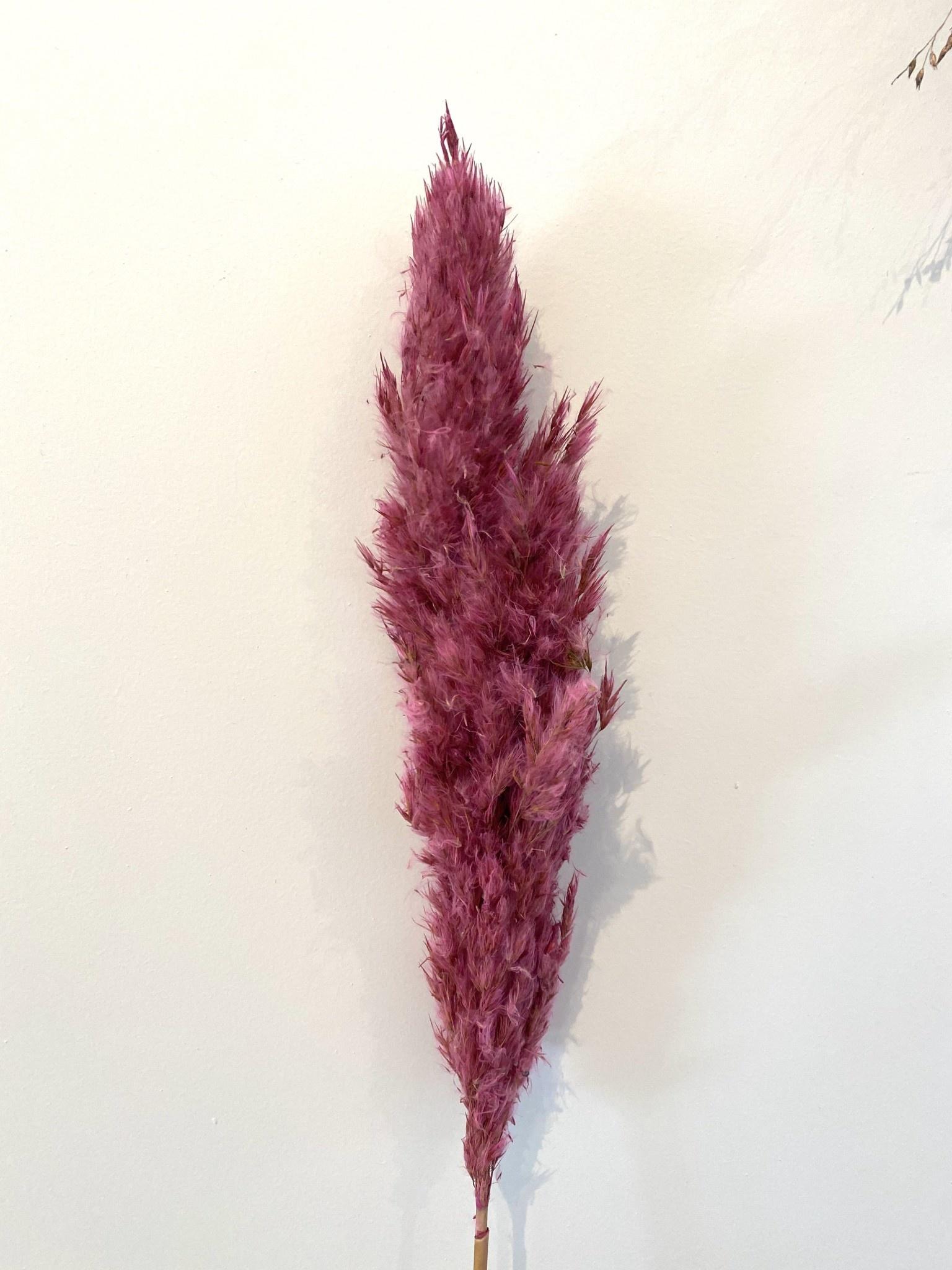 Mini Pampas Plumeau Roze - Atelier Olala-1