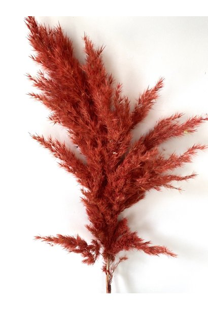 Mini Pampas Feather Stone Red
