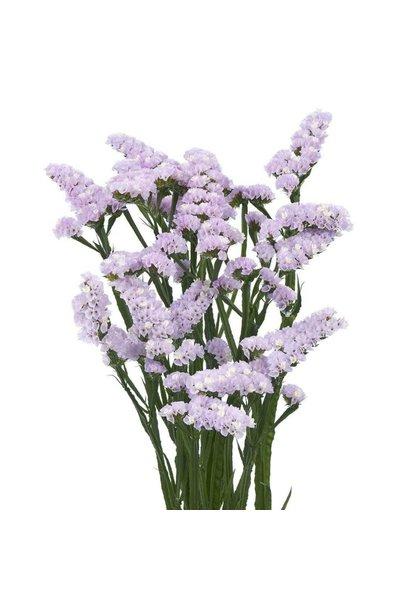 Flowerbar - Limonium Paars
