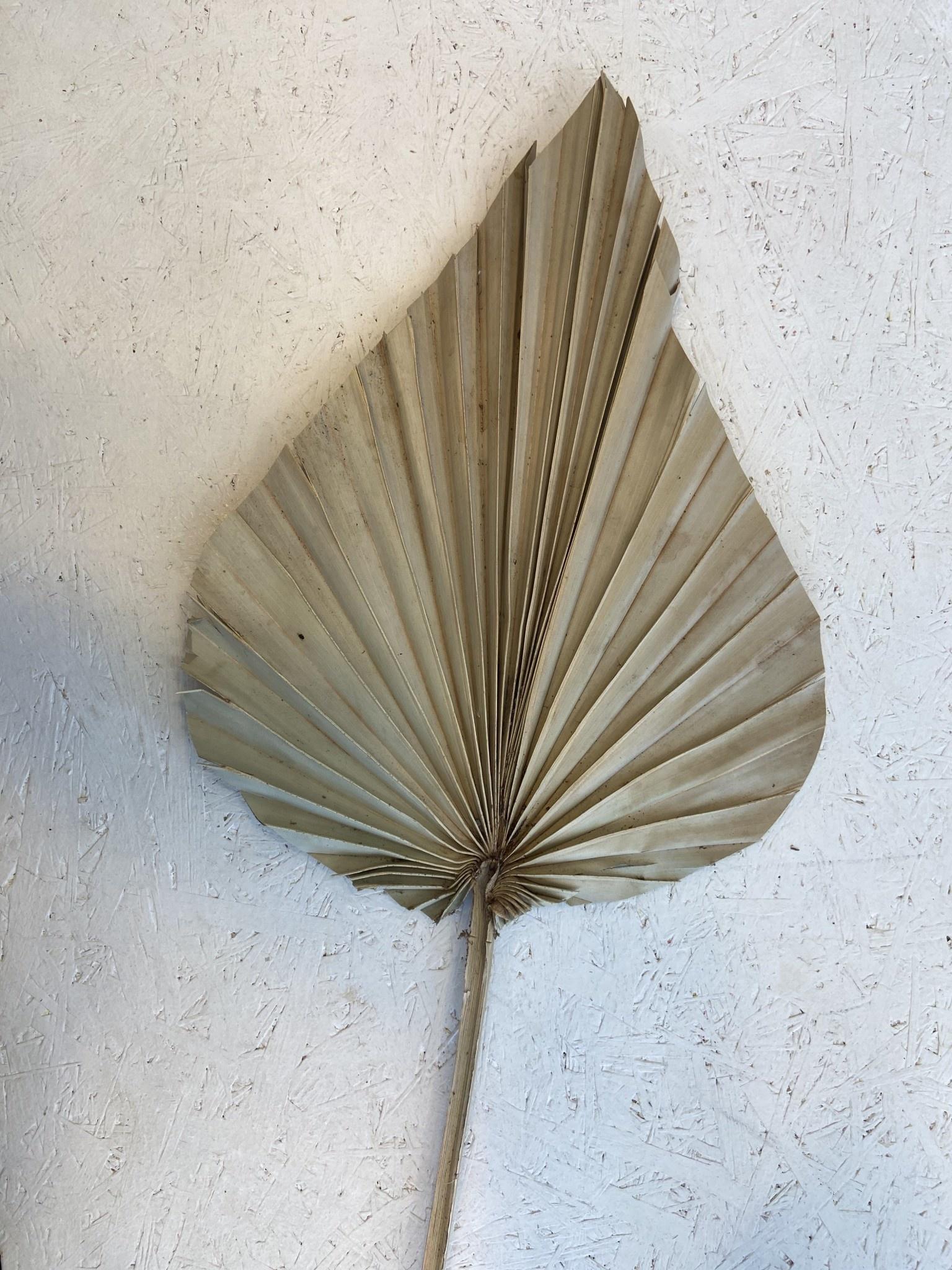 Palmspeer Medium-1