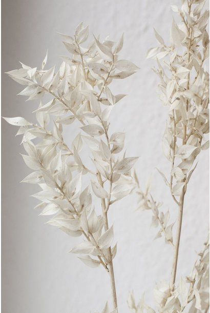 Flowerbar - Ruscus Wit