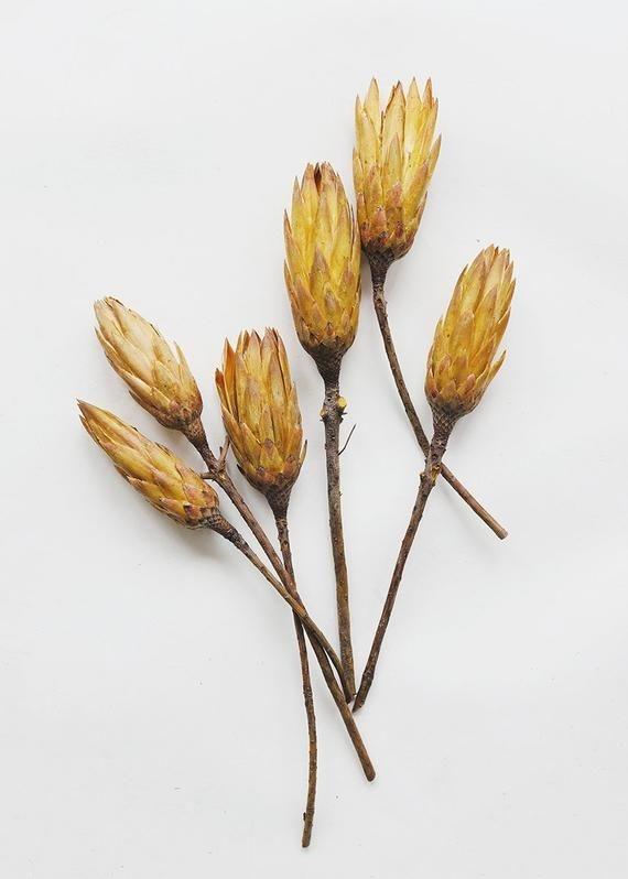 Flowerbar - Protea Geel - Atelier Olala-1