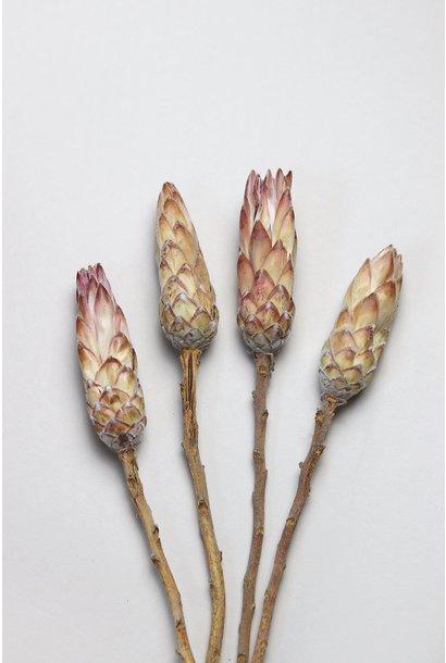 Flowerbar - Protea Roze Touch