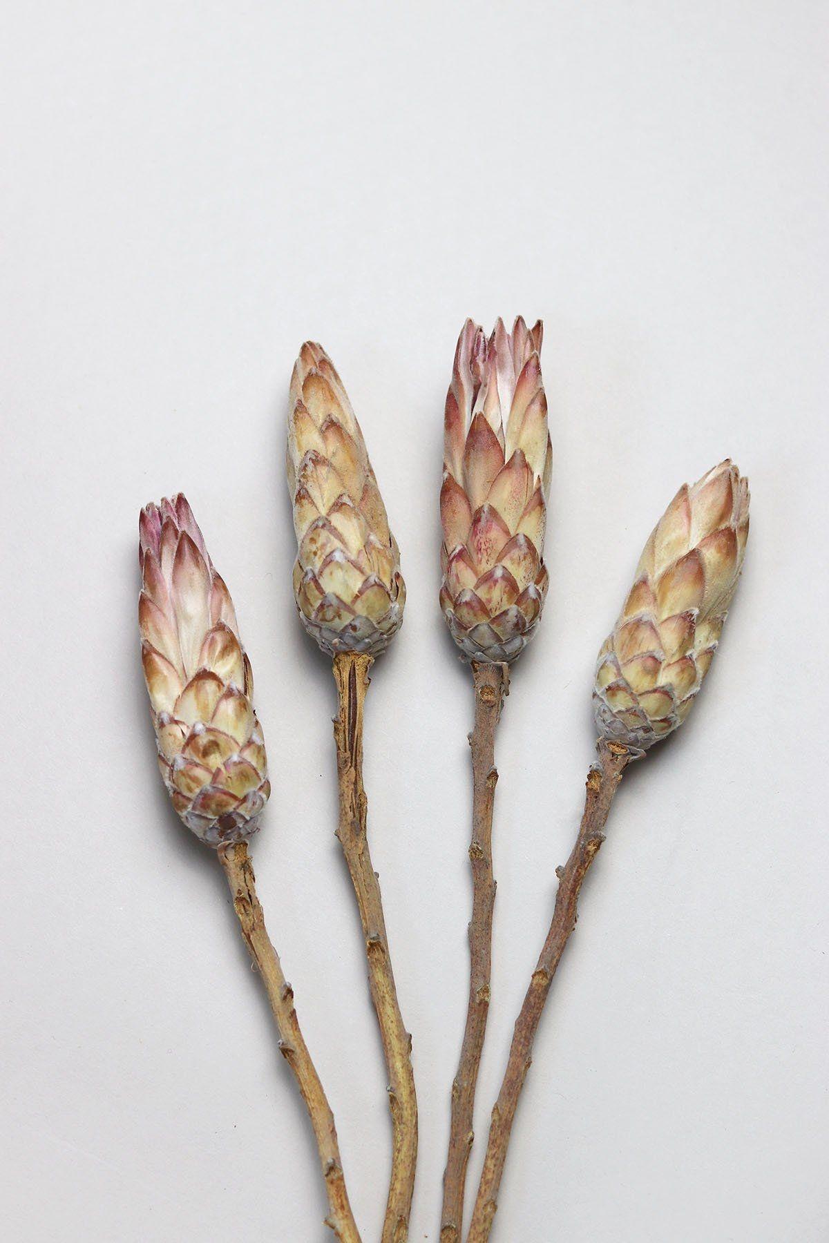 Flowerbar - Protea Roze Touch - Atelier Olala-1