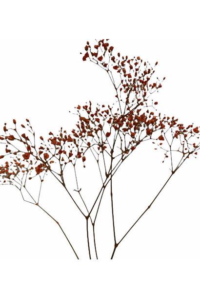 Flowerbar - Gipskruid Oranje