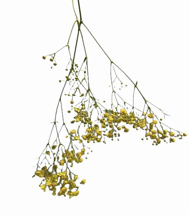 Flowerbar - Gipskruid Geel - Atelier Olala-1