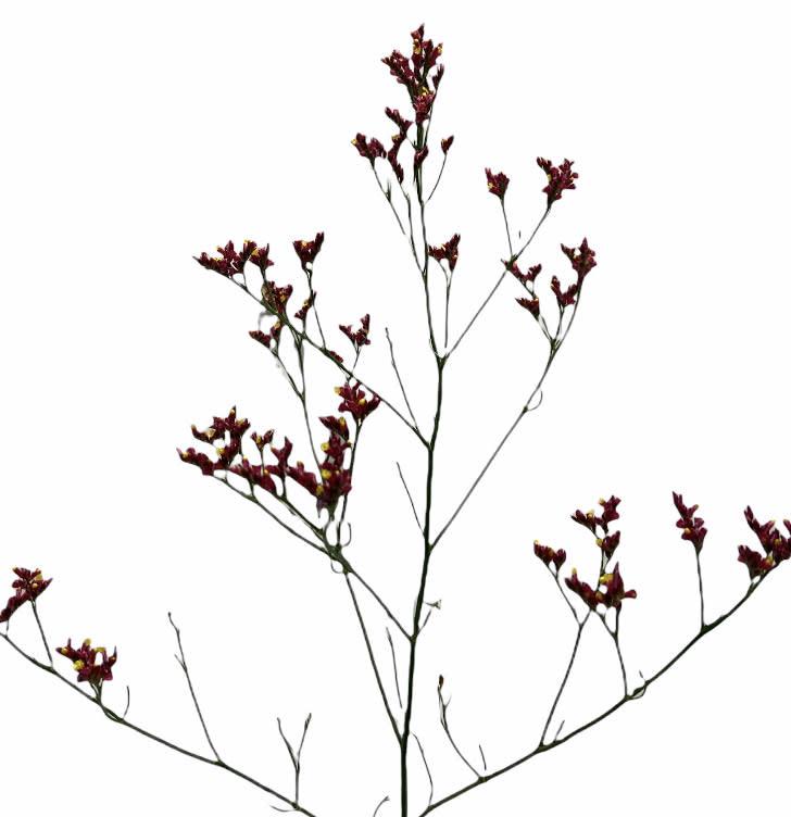 Flowerbar - Limonium Donkerroze Fijn - Atelier Olala-1