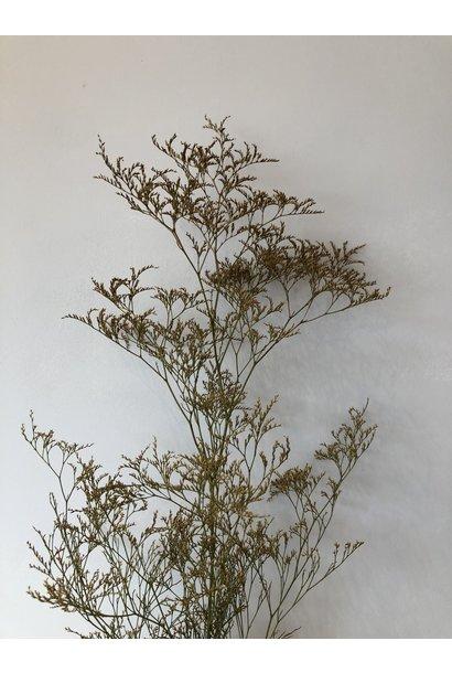 Flowerbar - Limonium Fijn Oker
