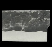 Intense Forged Koksmes 20 cm