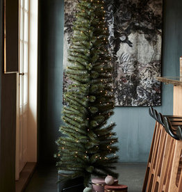 Sirius Alvin tree, H2,1+3m Green