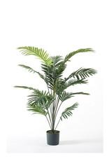 Emerald Eternal Green Palm Paradise 150cm green in pot