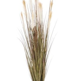 Emerald Eternal Green Pampas grass 150cm in pot