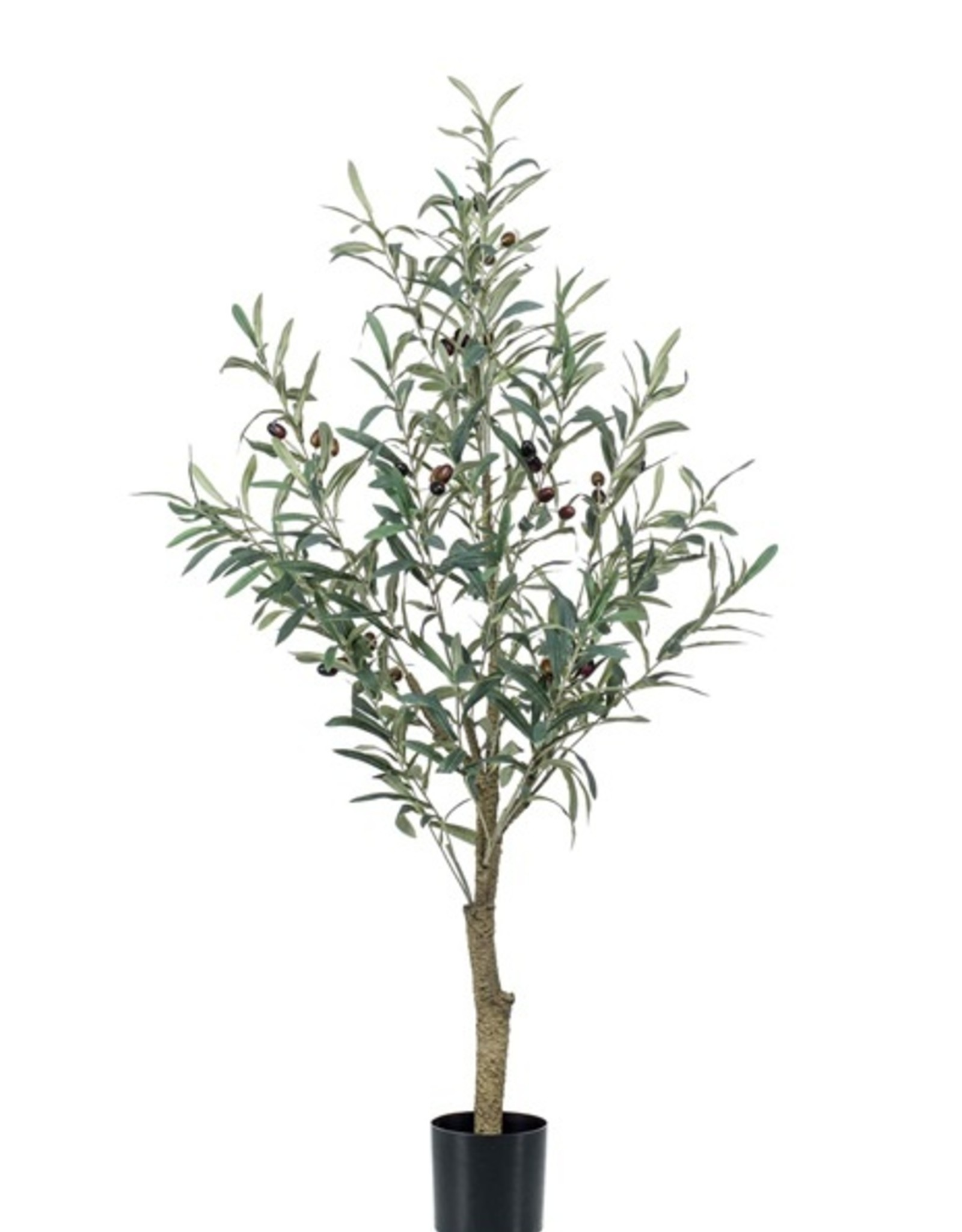Emerald Eternal Green Olive tree 115cm in pot