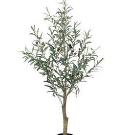 Emerald Eternal Green Olive tree 115cm in pot