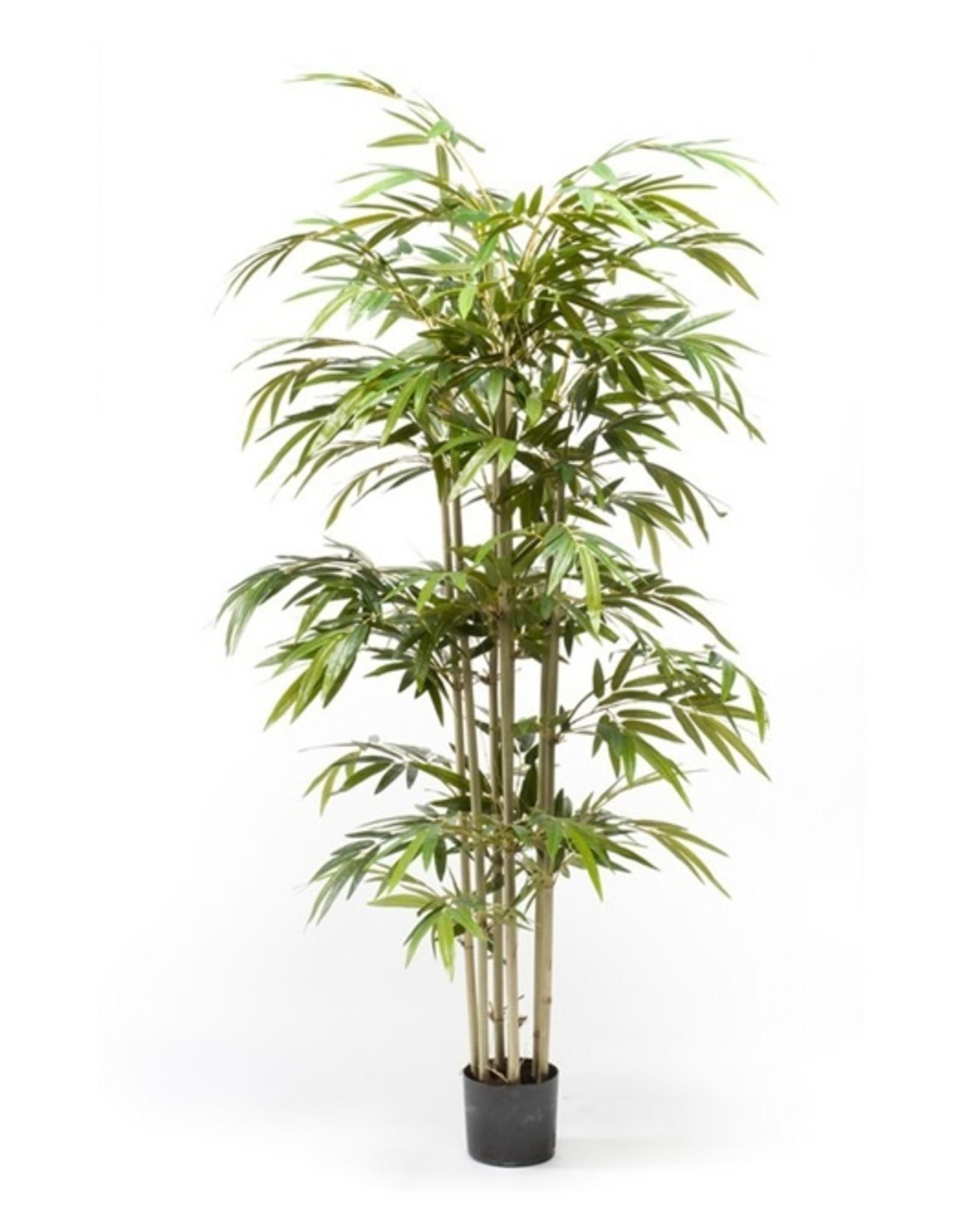Emerald Eternal Green Bamboo 150 cm