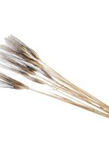 Droogbloemen tarwe black 100cm