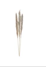 Droogbloemen pampas cv 115cm